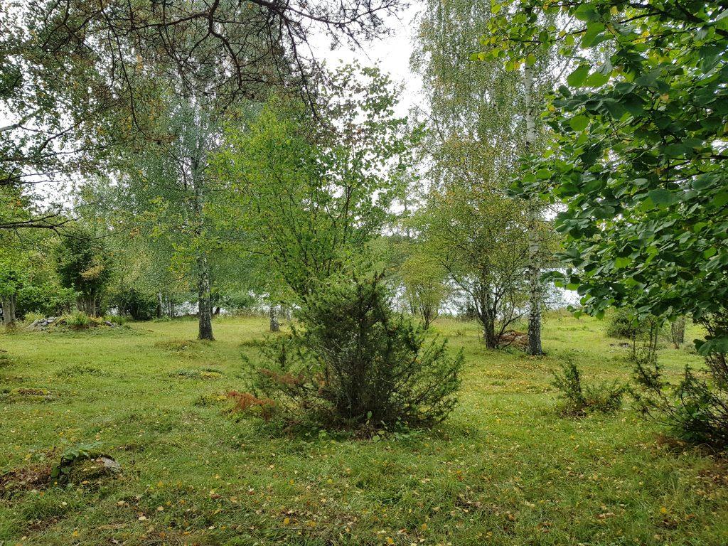 Holmsjöhultsängen del av vårt kulturarv i form av kulturmiljö.